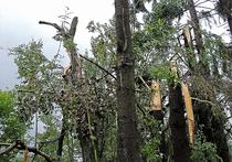 «Рузский Армагеддон»: жители пытаются оправиться от ураганного шока