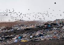 «Мусорный коллапс» в Омске: причины и следствия