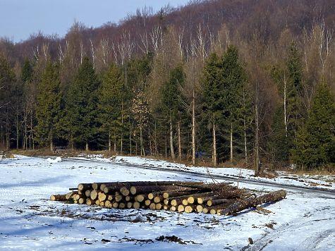 Предприниматель вОмской области нелегально нарубил елей на200 тыс.