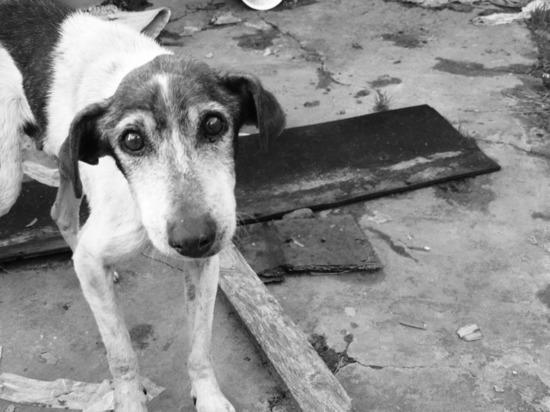 Депутаты Омского городского совета озадачились проблемой бродячих собак