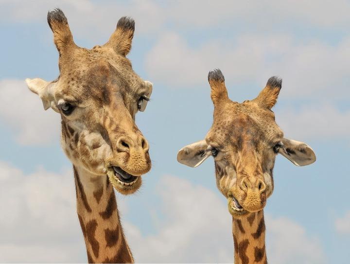ВОмске организовали телемарафон вподдержку Большереченского зоопарка