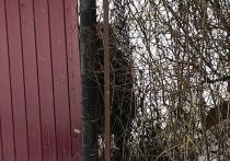 В Истринском районе завелся пес, который охотится за гениталиями